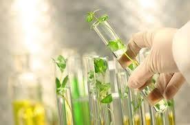 التطبيقات الحديثة والادوار المستقبلية  لتقنيات النانو في الزراعة