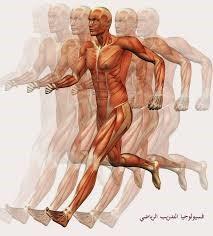 الخصائص البايوميكانيكية لأنسجة جسم الانسان